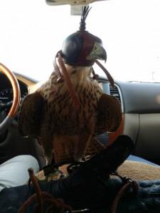 akhilaa-tourism-day-tour-falcon